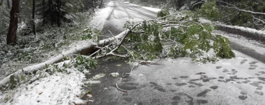 polska rosja 1 892x356 - Trwa usuwanie zniszczeń po orkanie Fryderyka