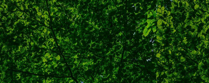 canopy 2552954 892x356 - Zieleń w mieście to nie luksus, to element polityki zdrowotnej