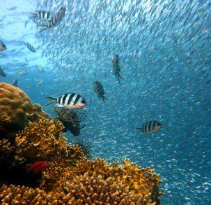 fish 378286 303x295 - Globalny zaduch w morzach i oceanach: powiększają się pustynie tlenowe