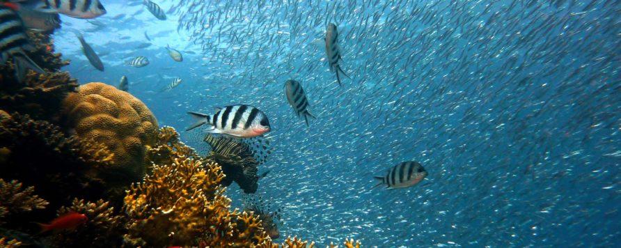 fish 378286 892x356 - Globalny zaduch w morzach i oceanach: powiększają się pustynie tlenowe