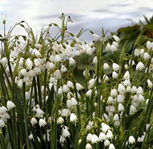 flower 3202043 303x295 - Wiosna przychodzi coraz wcześniej, zwłaszcza na północy