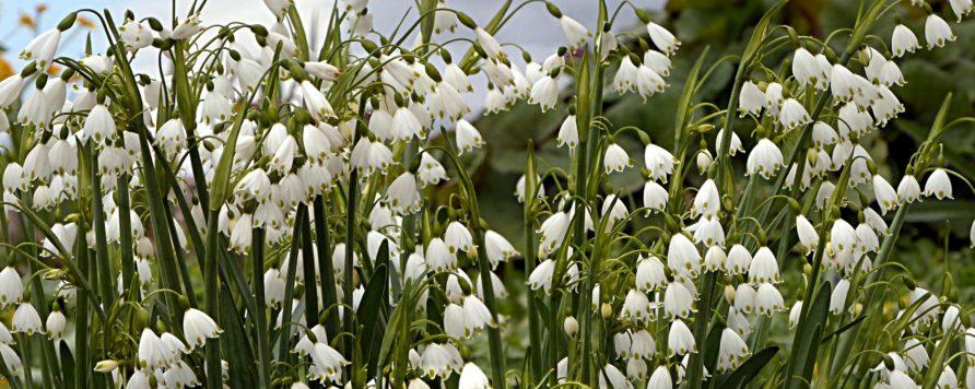 flower 3202043 892x356 - Wiosna przychodzi coraz wcześniej, zwłaszcza na północy