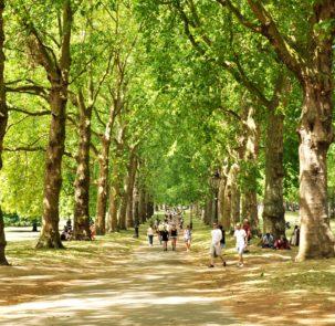 green park 2932220 303x295 - NFOŚiGW: 120 mln zł na zieleń na terenach zdegradowanych i rozwój zieleni miejskiej