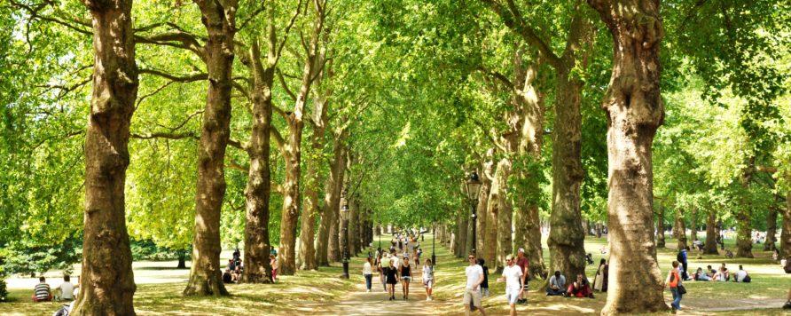 green park 2932220 892x356 - NFOŚiGW: 120 mln zł na zieleń na terenach zdegradowanych i rozwój zieleni miejskiej