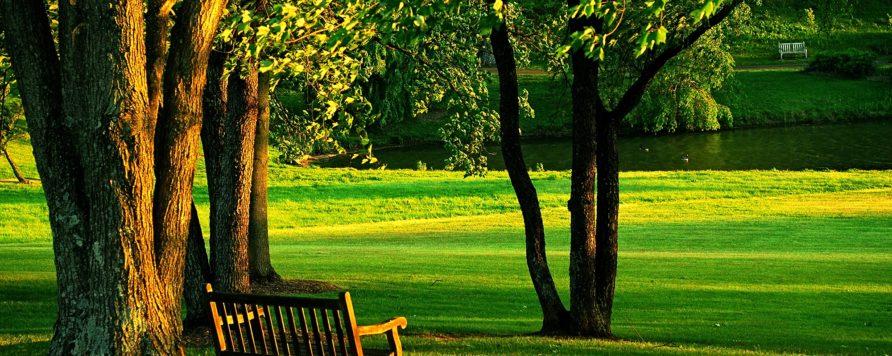 meadowlark 437252 892x356 - Konkurs grantowy Zielona Ławeczka: szansa na ogród na Twoim osiedlu