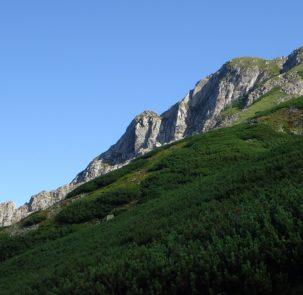 tatry 1580646 303x295 - Pomidor na Giewoncie: coraz więcej roślin zdobywa szczyty gór