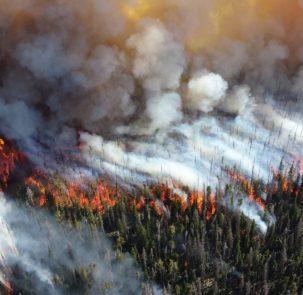 forest 1161868 1920 1 303x295 - Szwecja zmaga się z ogromnymi pożarami lasów