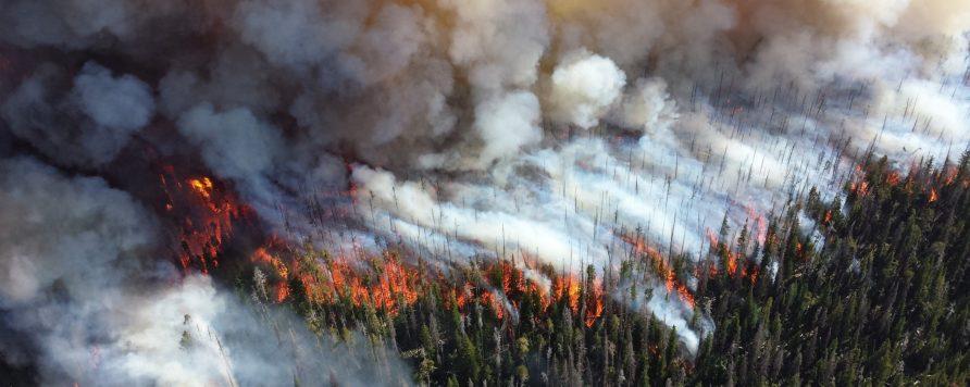 forest 1161868 1920 1 892x356 - Szwecja zmaga się z ogromnymi pożarami lasów