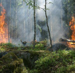 forest fire 432870 1920 303x295 - Raport ekspertów: Europę czeka coraz więcej pożarów