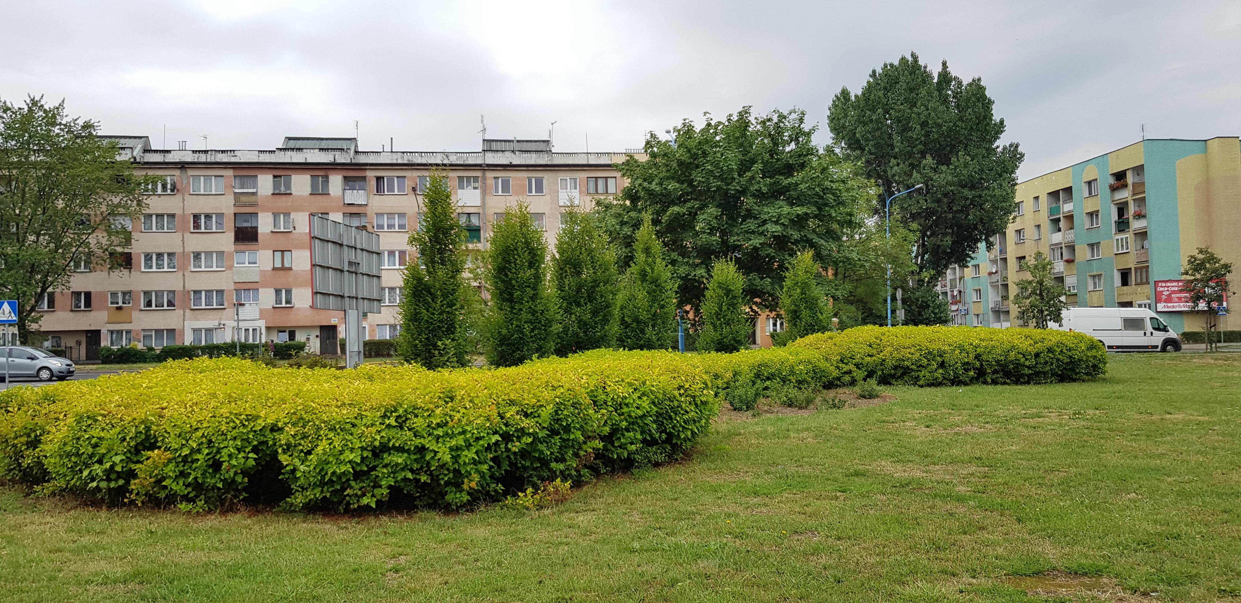 """zieleń izolacyjna - Legnica: """"Odnowa zieleni średniej i wysokiej"""""""